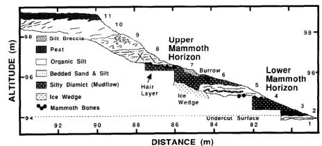 Colorado Creek mammoth stratigraphy