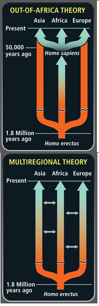 Out of africa or multiregional theory