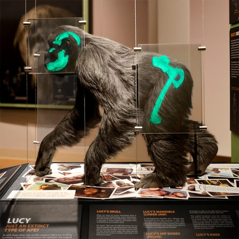The reconstruction of Lucy