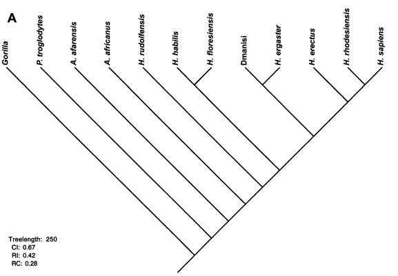 El árbol genealógico del análisis cladístico se le ocurrió