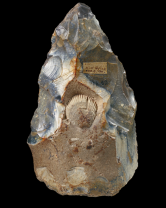 A rare handaxe with a shell embedded in the middle
