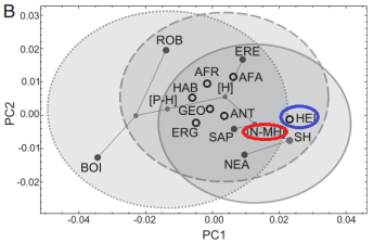 A comparison of the various teeth (heidlebergensis circled in blue) with the predictions of this study (circled in red). Heidelbergensis does not match the prediction!