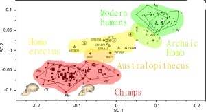 Homo erectus (with the Dmanisi finds) nicely fits on the transition from chimps to humans